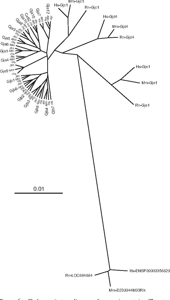 Figure 6 From Mutation In A Novel Connexin Like Gene Gjf1 In The
