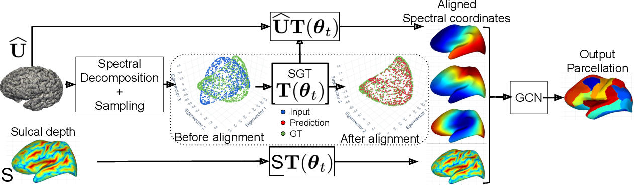 Figure 1 for Spectral Graph Transformer Networks for Brain Surface Parcellation