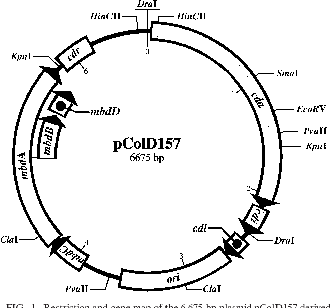 Structure And Function Of Plasmid Pcold 157 Of Enterohemorrhagic