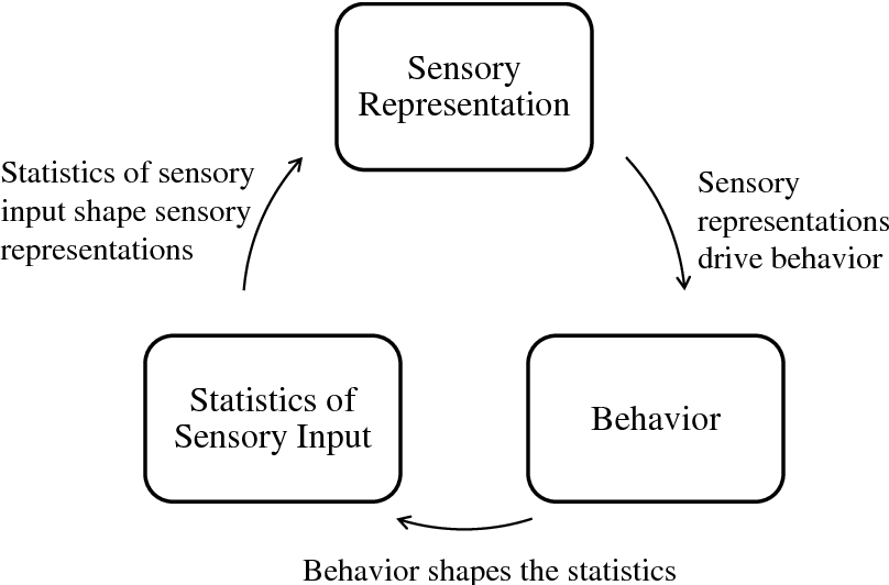 Figure 1 for An active efficient coding model of the optokinetic nystagmus