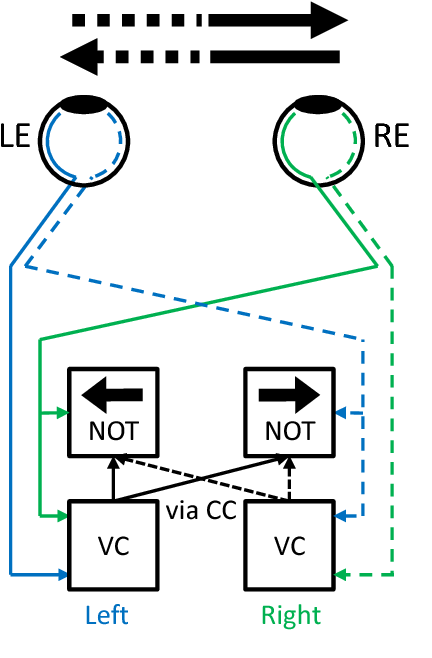 Figure 2 for An active efficient coding model of the optokinetic nystagmus