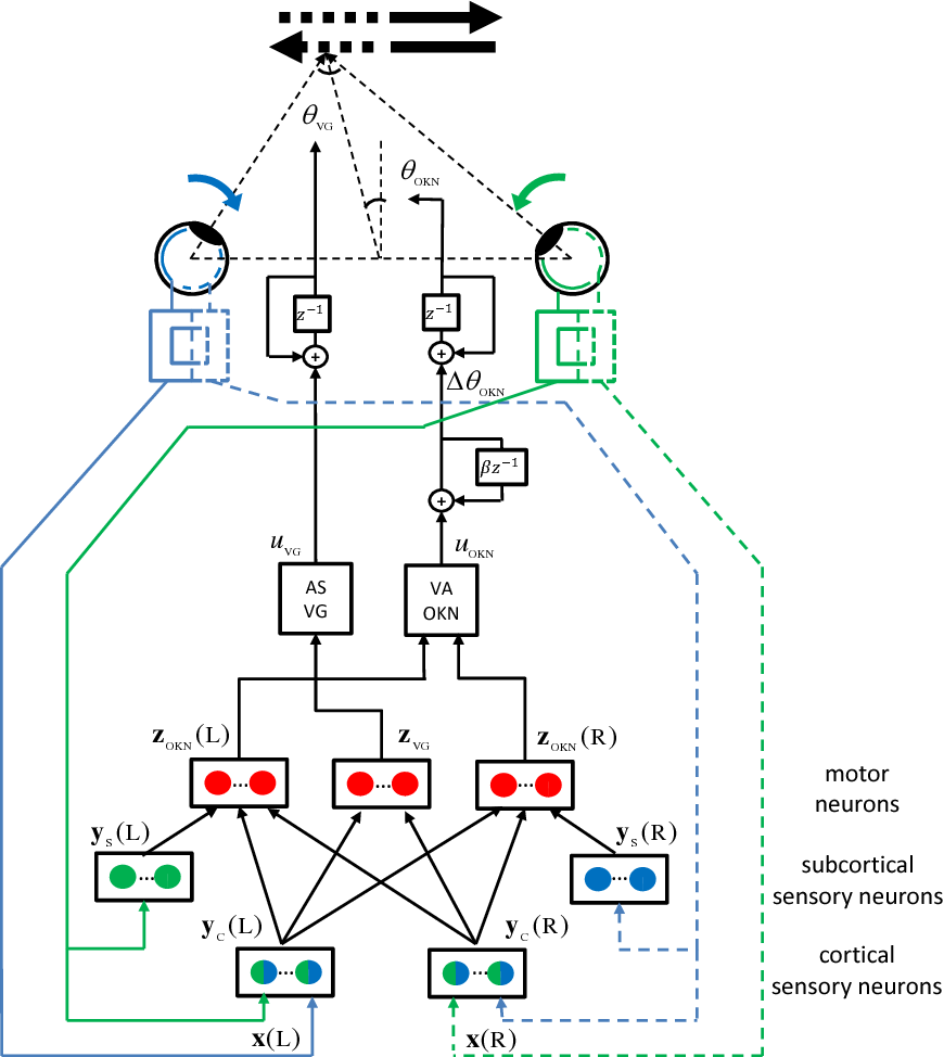 Figure 3 for An active efficient coding model of the optokinetic nystagmus