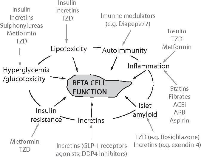 Diabetes And Beta Cell Function From Mechanisms To Evaluation And