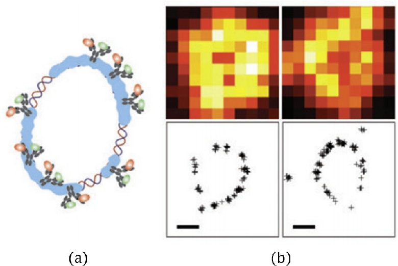 Figure 3 for Deep Unrolled Recovery in Sparse Biological Imaging