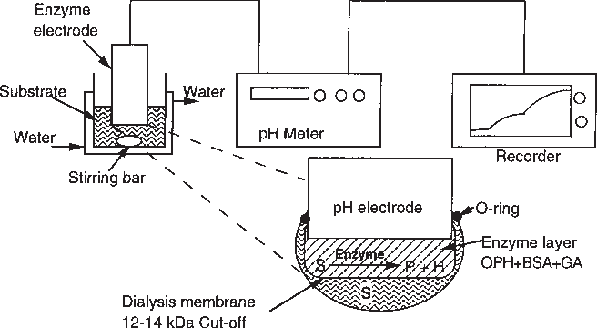 enzyme electrode