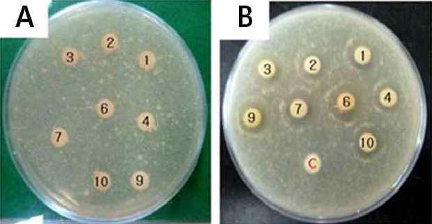Figure 3 from Antimicrobial Activity against Potato Common Scab