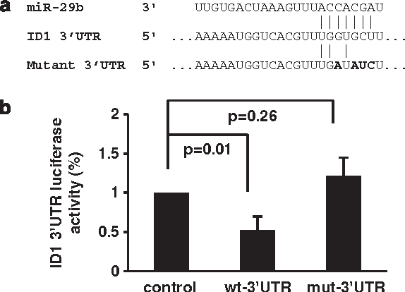 Figure 2 miR-29b targets the ID1 30-UTR. (a) Alignment of miR29b with the ID1 30-UTR according to computed sequence alignment by TargetScan and MicroCosm Targets. To prove the specificity of the binding, a mutated ID1 30-UTR construct was tested in parallel. (b) Luciferase activity in H1299 cells transiently transfected with the luciferase construct containing a housekeeping gene 30-UTR (peptidylprolyl isomerase A (PPIA); control), the ID1 30-UTR (wild type (wt)-30-UTR) or a mutated variant of the ID1 30-UTR (mut-30-UTR). All data are representative of three independent experiments. Differences in luciferase activity were analyzed by Mann-Whitney U test.