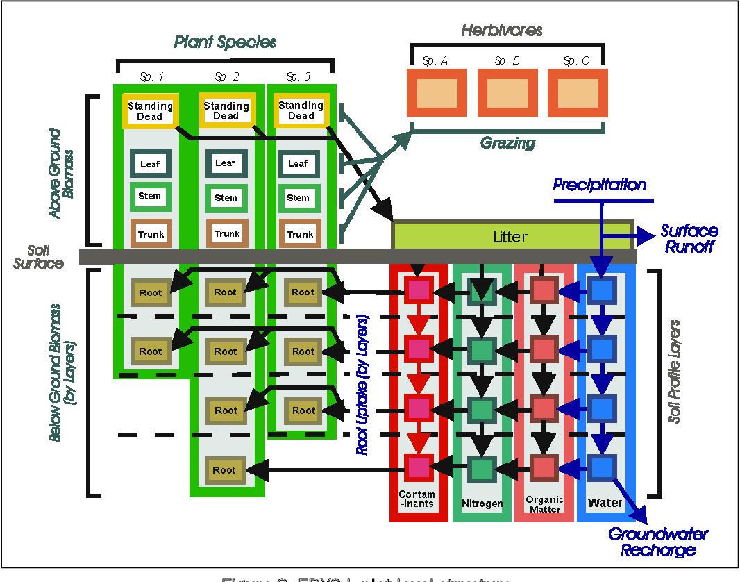 PDF] Ecological DYnamics Simulation Model - Light (EDYS-L