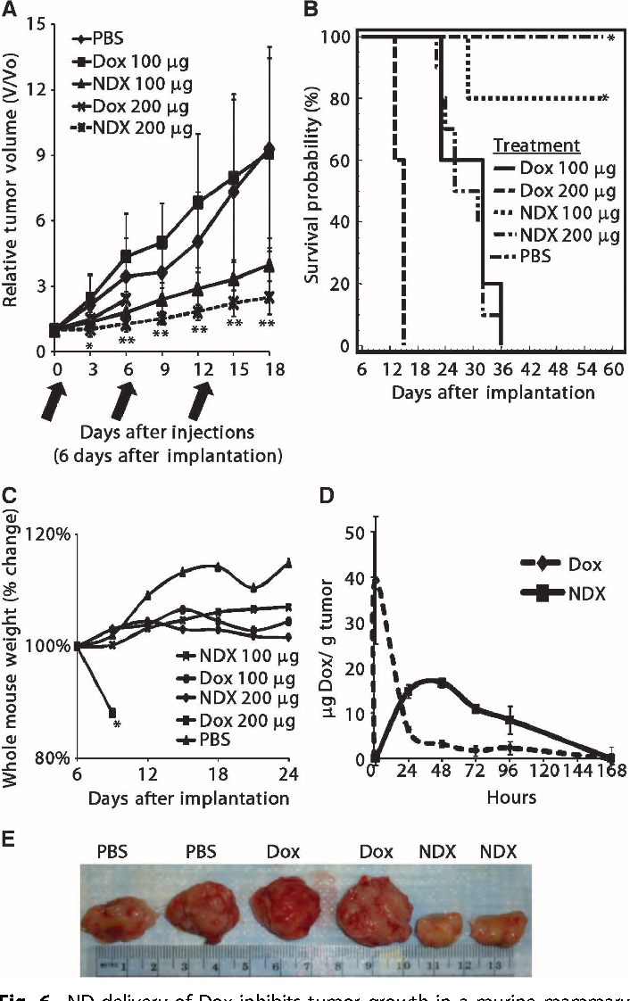 Fig. 6. ND delivery of Dox inhibits tumor growth in a murine mammary carcinoma model. (A) 4T1 cells (5 × 106) injected into the left and right number 4 mammary gland of BALB/c virgin female mice. Mice were treated with PBS (n = 18), Dox (100 mg) (n = 18), NDX (100 mg of Dox equivalent) (n = 18), Dox (200 mg) (n = 10), or NDX (200 mg of Dox equivalent) (n = 10) by tail vein injection. Black arrows denote injection days. Asterisks indicate statistically significant differences between Dox- and NDX-treated mice. Data are represented as means ± SD. *P < 0.02; **P < 0.0005. (B) Kaplan-Meier survival plot for 4T1 mice treated with PBS (n = 7), Dox (100 mg) (n = 10), NDX (100 mg of Dox equivalent) (n = 10), Dox (200 mg) (n = 5), or NDX (200 mg of Dox equivalent) (n = 5) by tail vein injection every 6 days. *P < 0.003. (C) Whole mouse weight analysis of 4T1 mice treated with PBS (n = 10), Dox (100 mg) (n = 5), NDX (100 mg of Dox equivalent) (n = 5), Dox (200 mg) (n = 5), or NDX (200 mg of Dox equivalent) (n = 5) by tail vein injection every 6 days. *P < 0.003. (D) Tumor retention analysis of 4T1 mice treated with Dox (200 mg) (n = 4) or NDX (200 mg of Dox equivalent) (n = 4) by tail vein injection. Data are represented as means ± SD. (E) Representative images of excised tumors from treated mice.