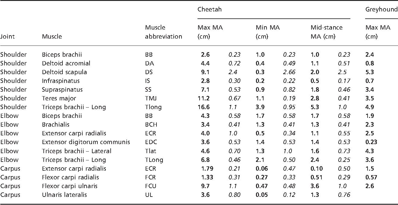 Table 3 from Functional anatomy of the cheetah (Acinonyx jubatus ...
