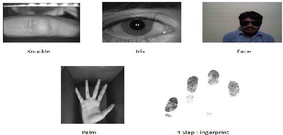 Figure 1 for UBSegNet: Unified Biometric Region of Interest Segmentation Network
