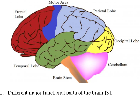 Evaluating the connectivity of motor area with prefrontal cortex by ...