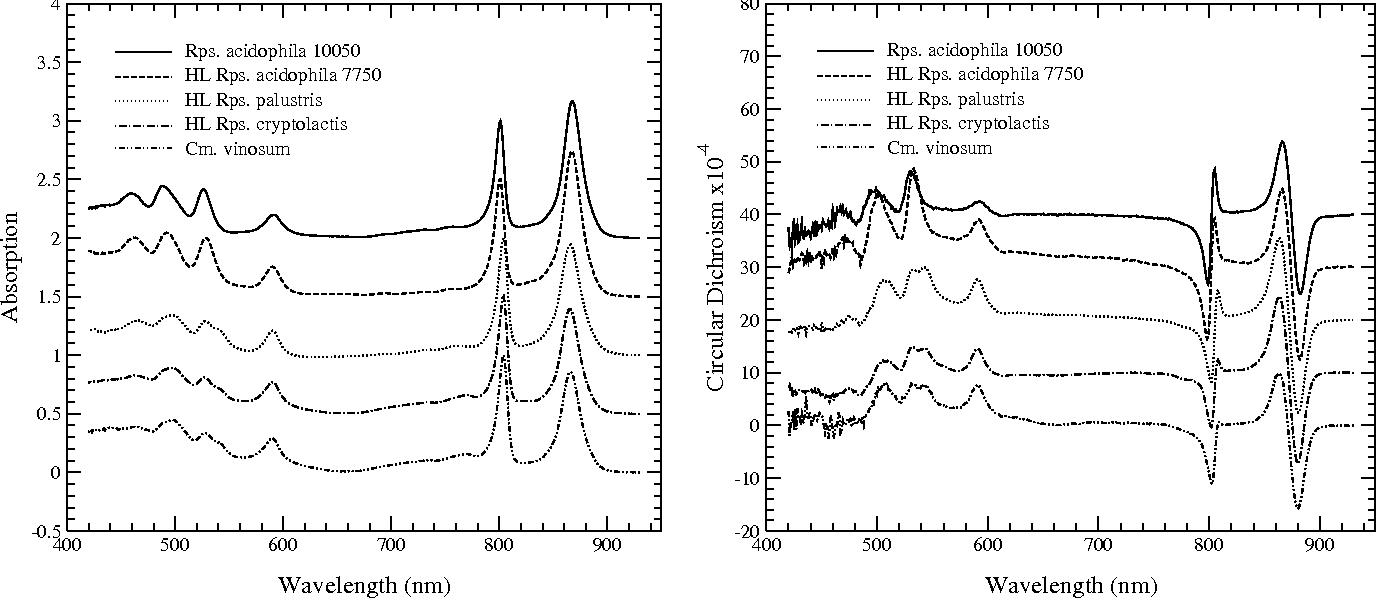 cd spectroscopy