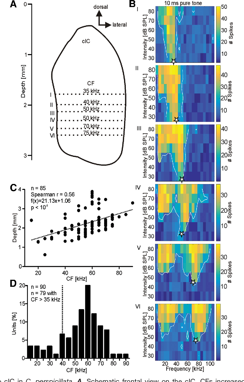 Processing of Natural Echolocation Sequences in the Inferior ...