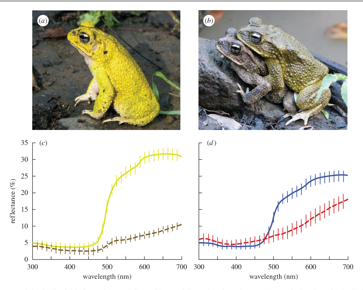 Sexual selection and sexual dimorphism in the amphibia