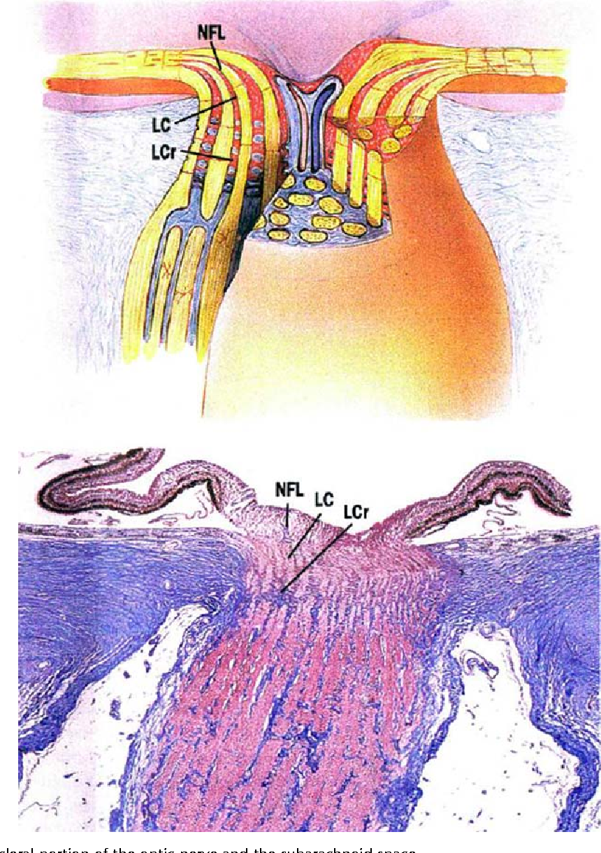 Figure 2 from Anatomy of the visual pathways. - Semantic Scholar