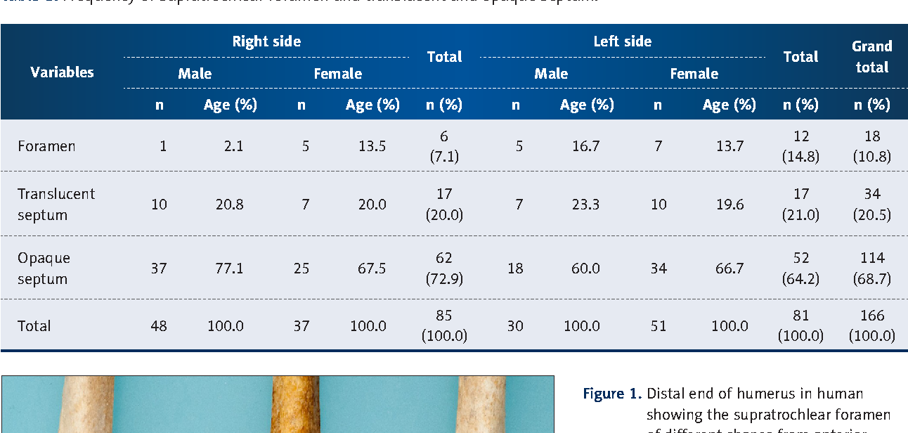 The Importance Of The Supratrochlear Foramen Of The Humerus In