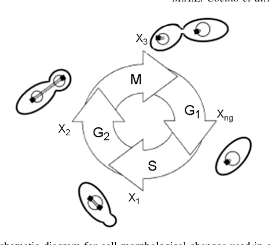 Figure 1 From Analysis Of The Effects Of Hyperbaric Gases On S