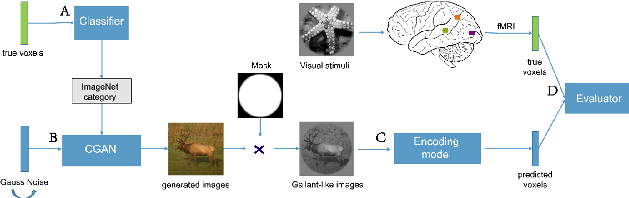 Figure 1 for BigGAN-based Bayesian reconstruction of natural images from human brain activity