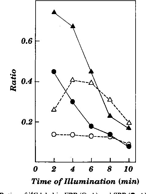 FIG. 7. Ratios of 14C label in FBP (0, A) and SBP (0, A) to those in HMP within control (0, 0) and arsenite treated (A, A) pea chloroplasts. Data were used from the experiment shown in Figure 6.