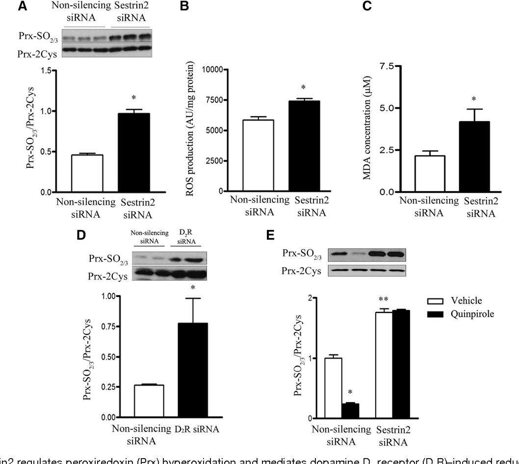 PDF] Sestrin 2 Decreases Renal Oxidative Stress , Lowers Blood