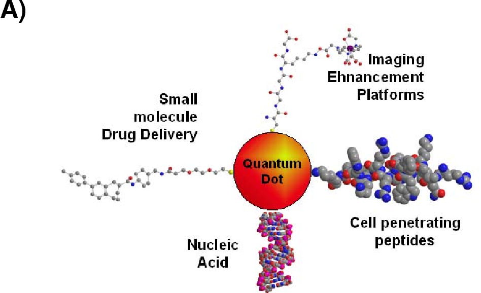 Application Of Quantum Dots In Gene Therapy Semantic Scholar