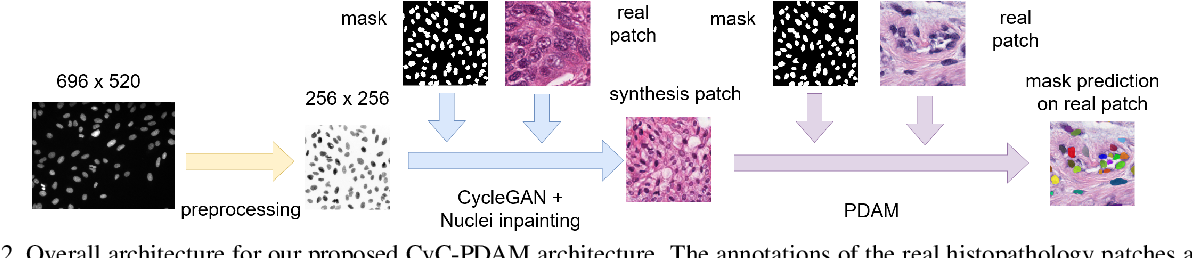 Figure 3 for Unsupervised Instance Segmentation in Microscopy Images via Panoptic Domain Adaptation and Task Re-weighting