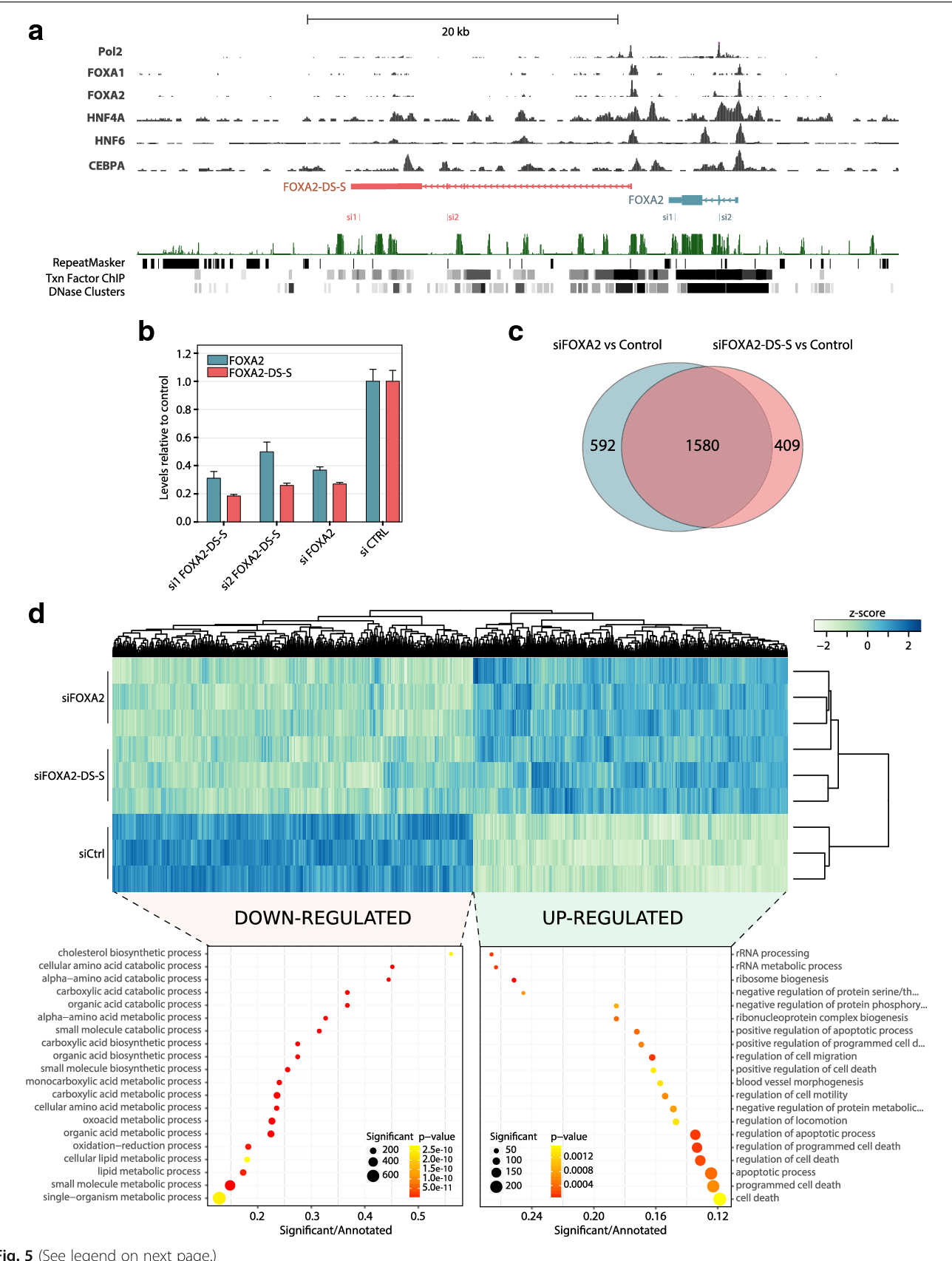 Genomic positional conservation identifies topological anchor point ...
