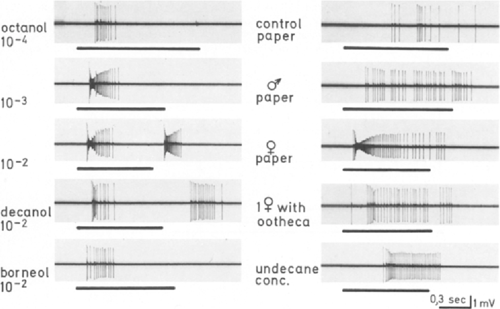 Figure 4 from CNS Units in cockroach (Periplaneta americana ...