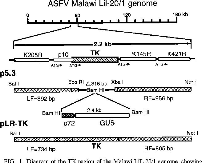 diagram of the tk region of the malawi lil-20/
