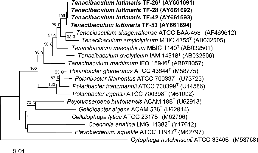 Fig. 1. Neighbour-joining phylogenetic tree based on 16S rRNA gene sequences showing the positions of strains TF-26T, TF-28, TF-42 and TF-53 and some other related taxa. The numbers on the branches indicate the bootstrap value of 1000 resamplings (greater than 50%). Bar, 0?01 substitution per nucleotide position.