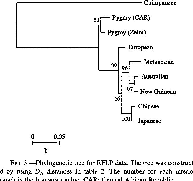 FIG. 3.-Phylogenetic tree for RFLP data. The tree was constructed by using D, distances in table 2. The number for each interior branch is the bootstrap value. CAR: Central African Republic.