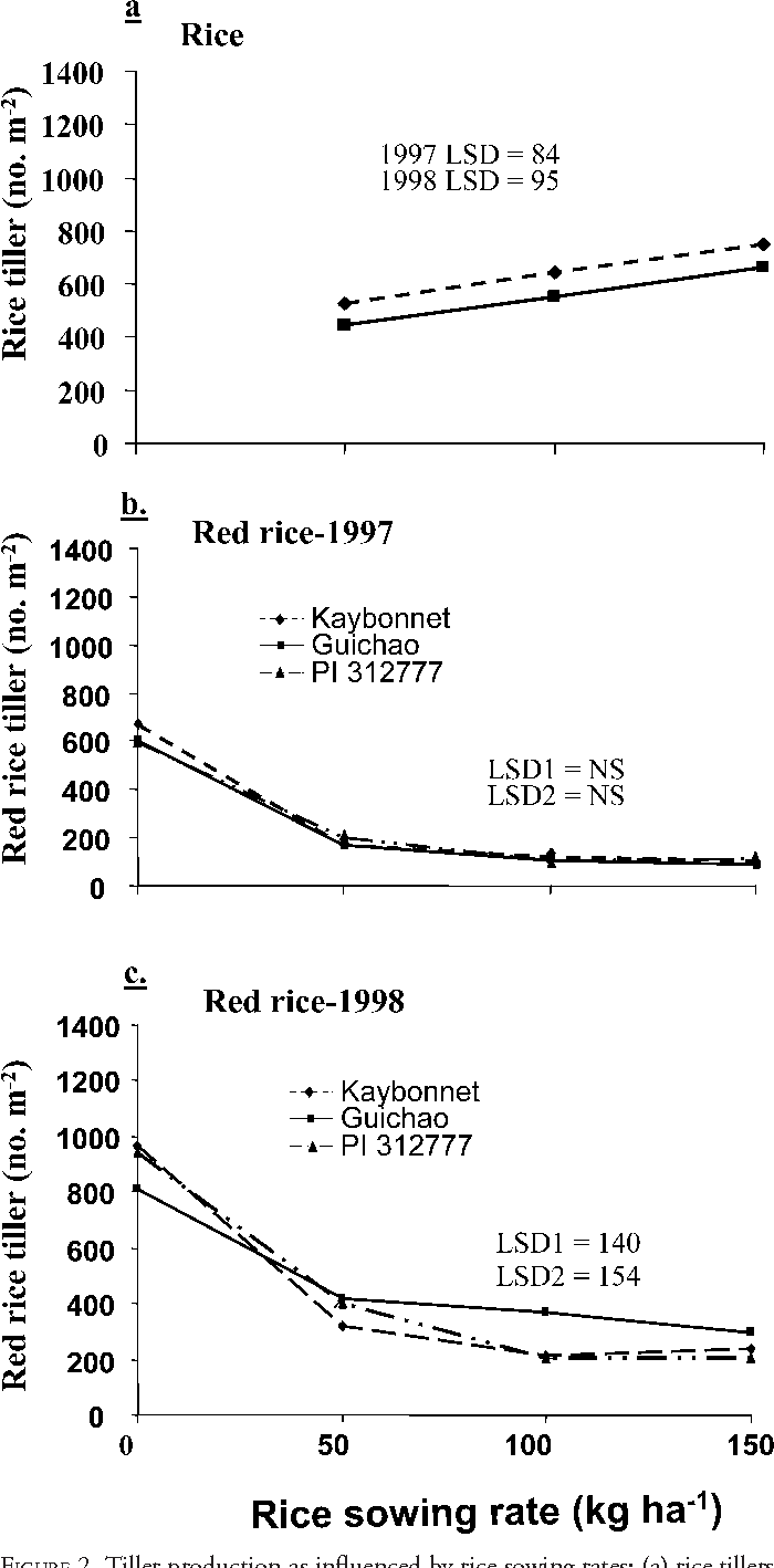 FIGURE 2. Tiller production as influenced by rice sowing rates: (a) rice tillers averaged over three rice cultivars in 1997 and 1998; (b and c) red rice tiller production in 1997 and 1998, respectively. Least significant difference (LSD) test (0.05): (a) compares sowing rate means in each year; (b and c) LSD1 compares sowing rate means for the same cultivar, and LSD2 compares cultivar means for the same or different rice sowing rate.