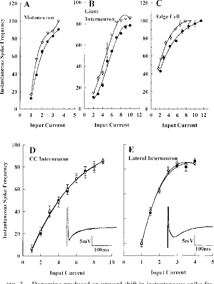 Dopaminergic Modulation Of Spinal Neurons And Synaptic Potentials In