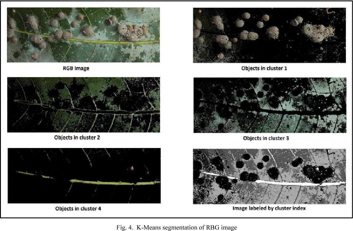 PDF] OpenCV based disease identification of mango leaves - Semantic
