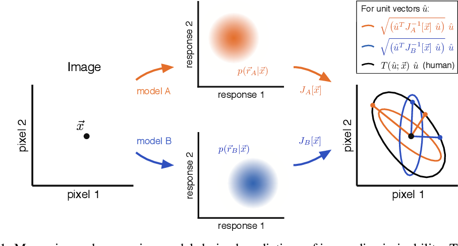 Figure 1 for Eigen-Distortions of Hierarchical Representations