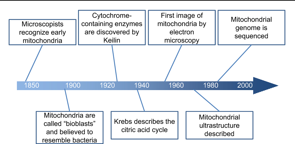 Figure 1 From Mitochondria In Acute Kidney Injury