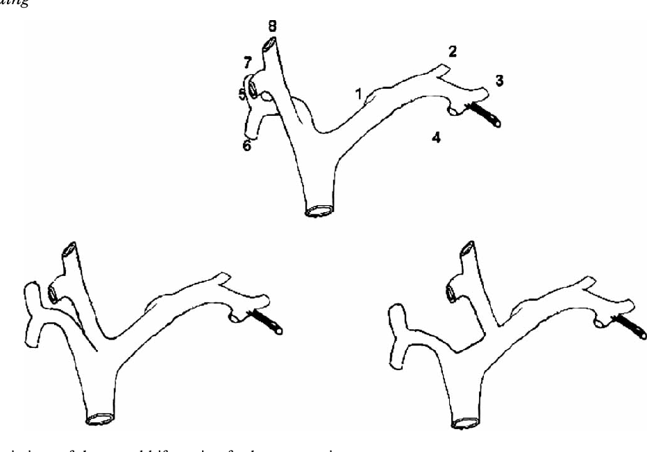 Figure 5 From Surgical Anatomy Of The Biliary Tract Semantic Scholar