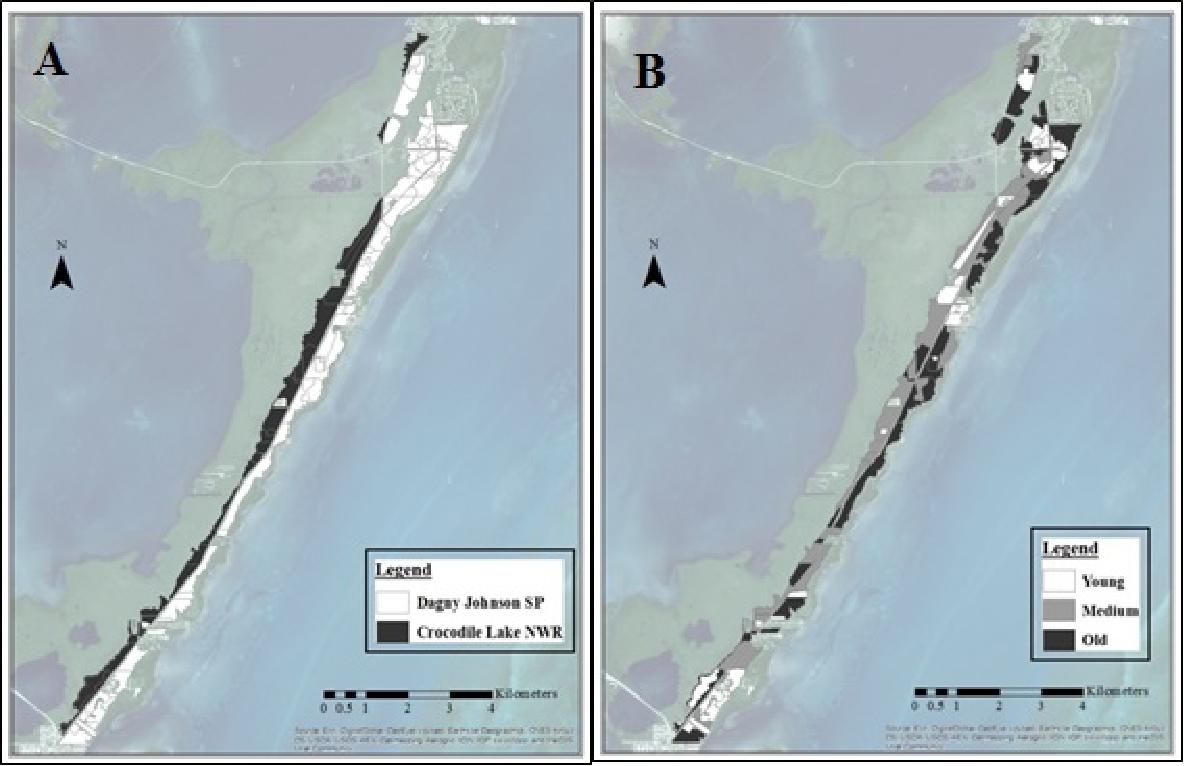 Figure 1 from Habitat Use of the Key Largo Woodrat (Neotoma ... on