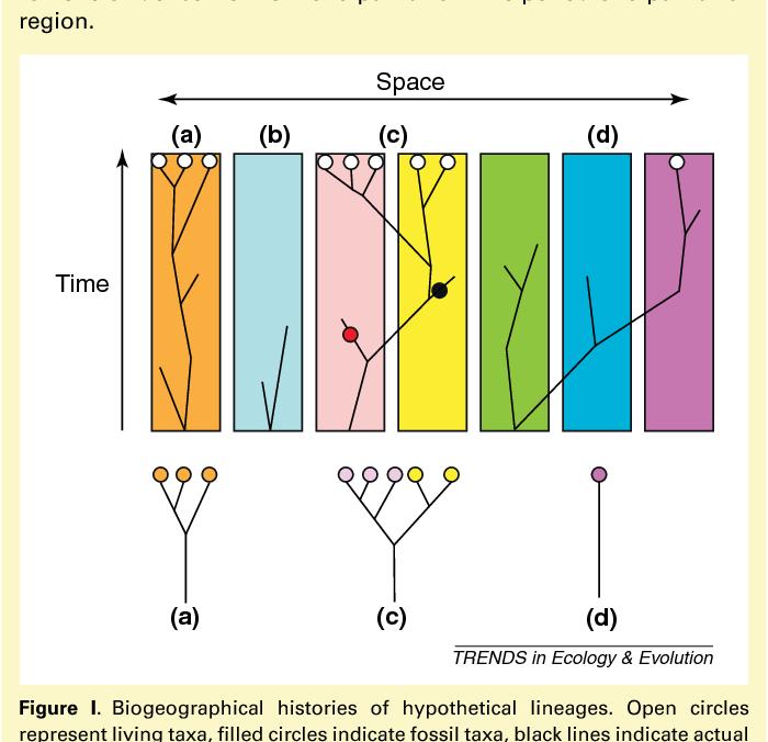 Hypothesis testing in biogeography  - Semantic Scholar