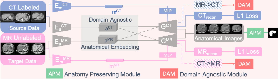 Figure 3 for Domain-Agnostic Learning with Anatomy-Consistent Embedding for Cross-Modality Liver Segmentation