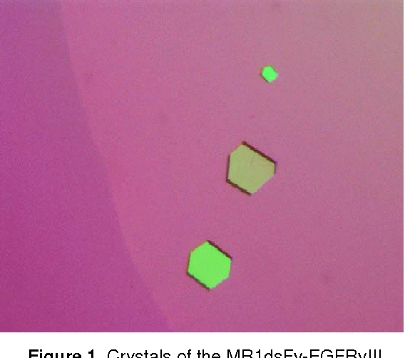 Figure 1. Crystals of the MR1dsFv-EGFRvIII peptide complex.