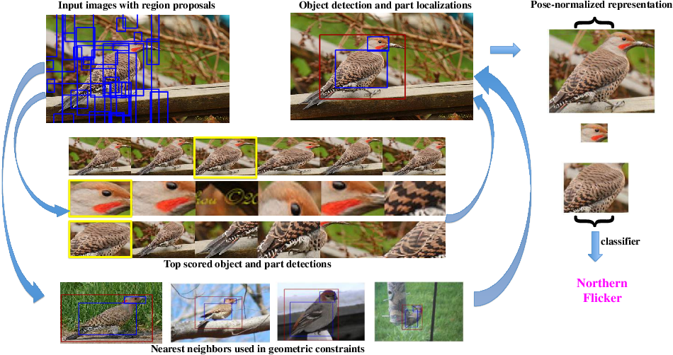 Figure 1 for Part-based R-CNNs for Fine-grained Category Detection