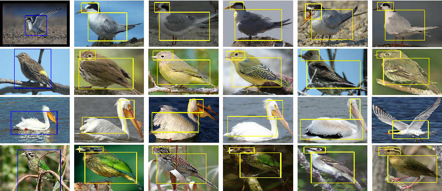 Figure 3 for Part-based R-CNNs for Fine-grained Category Detection