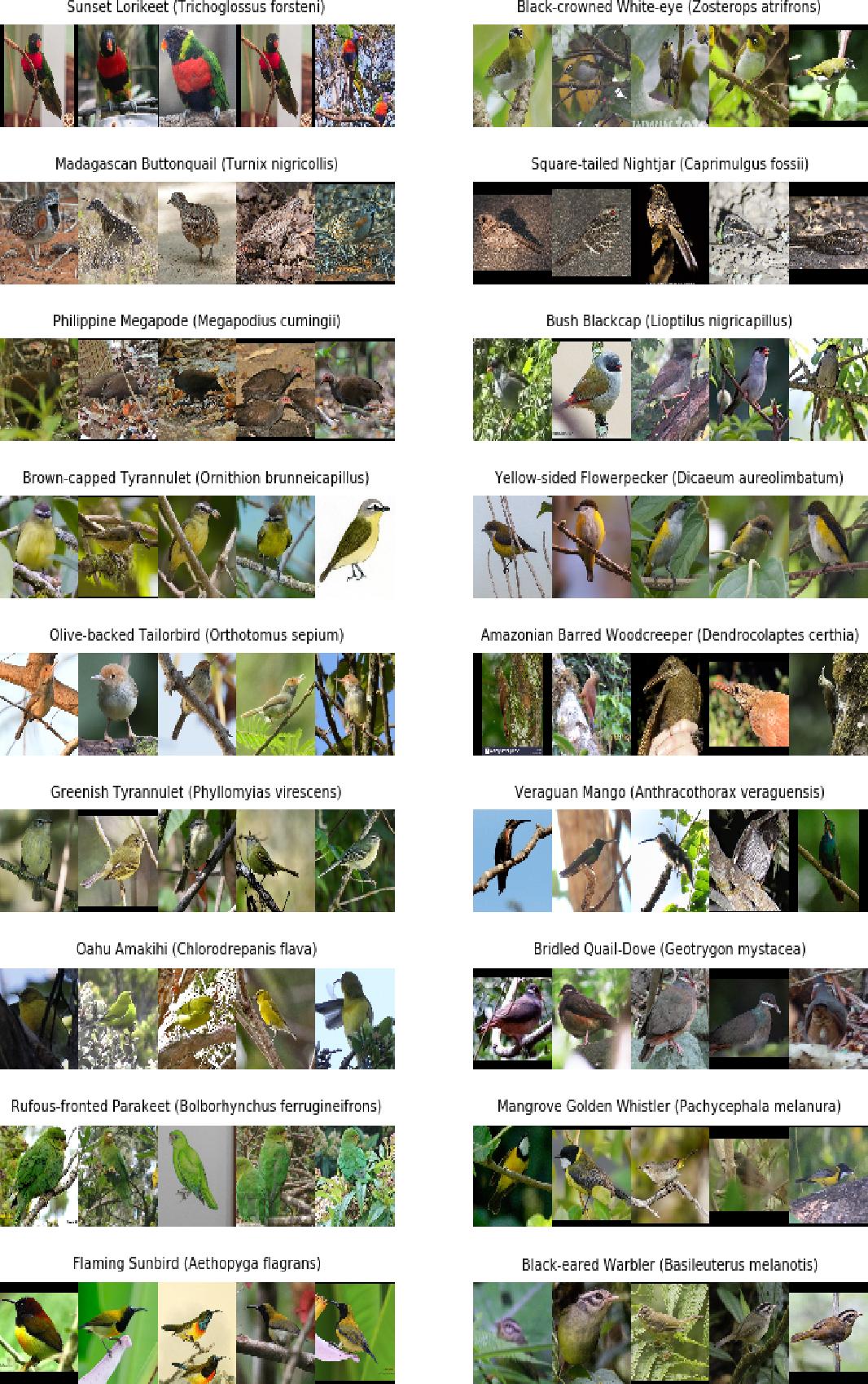 Figure 2 for The DongNiao International Birds 10000 Dataset