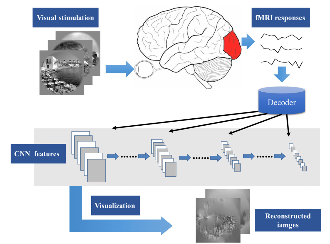 Figure 1 for Constraint-free Natural Image Reconstruction from fMRI Signals Based on Convolutional Neural Network