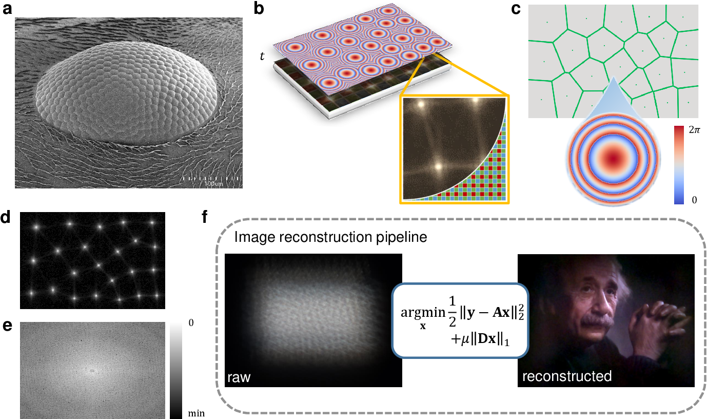 Figure 1 for Compound eye inspired flat lensless imaging with spatially-coded Voronoi-Fresnel phase