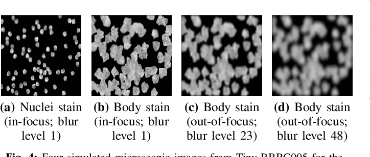 Figure 4 for Classification Beats Regression: Counting of Cells from Greyscale Microscopic Images based on Annotation-free Training Samples