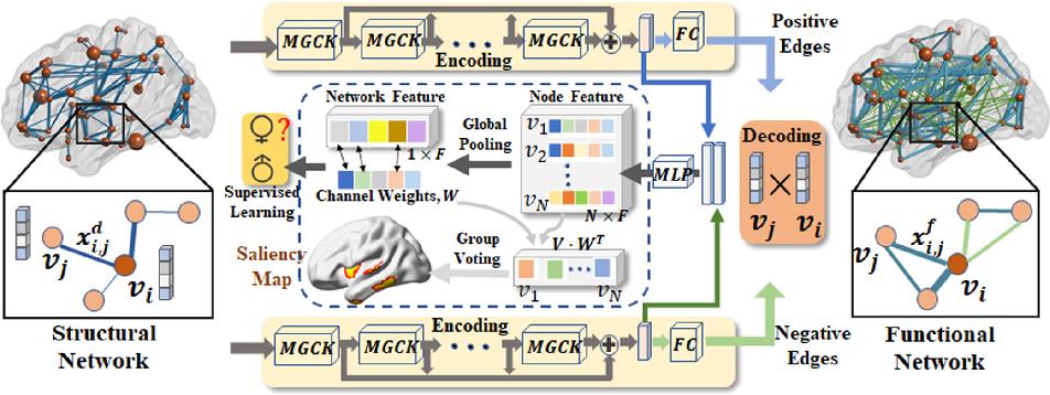 Figure 3 for Deep Representation Learning For Multimodal Brain Networks