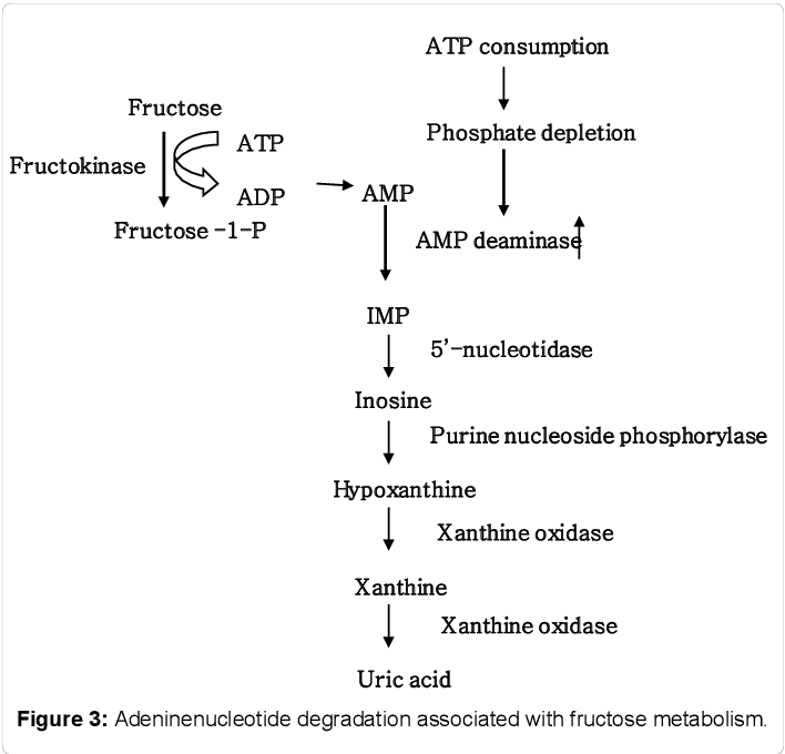 PDF] Effects on Uric Acid Metabolism of the Drugs except the